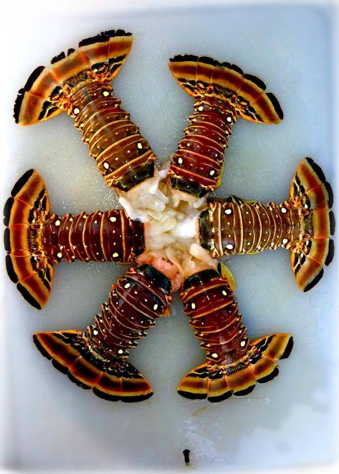 Lobster Art,  So cool!